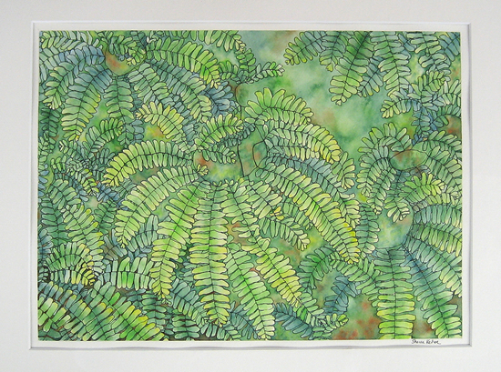 Ferns. Pen and Ink, Watercolor.
