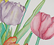 Tulips. One of two in Tulips Watercolor Set.